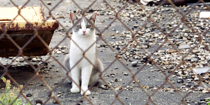 Alley Cat Advocates Trap Neuter Release And Volunteer Services For