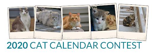 2020 Cat Calendar Contest Banner